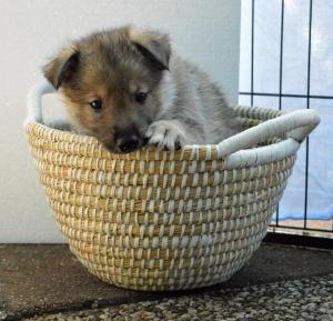 Dany x Noah pups (52) (Copy)